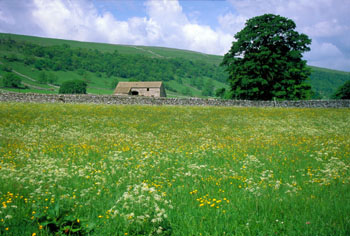 Flowering Haymeadow near Arncliffe Littondale Yorkshire Dales